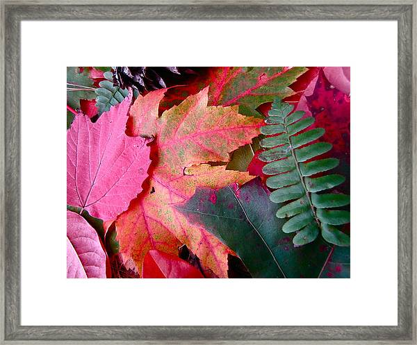 Textures Of Nature Framed Print