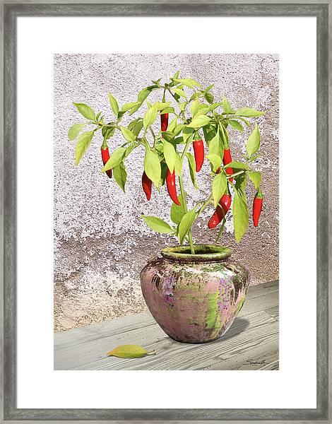Thai Chili Plant In Pot Framed Print