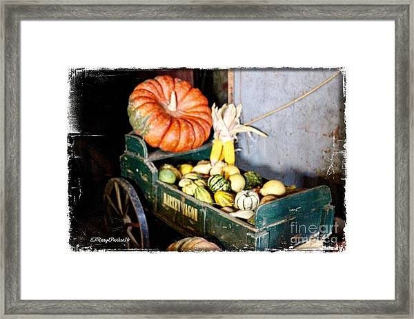 Thanksgiving  Harvest      Framed Print