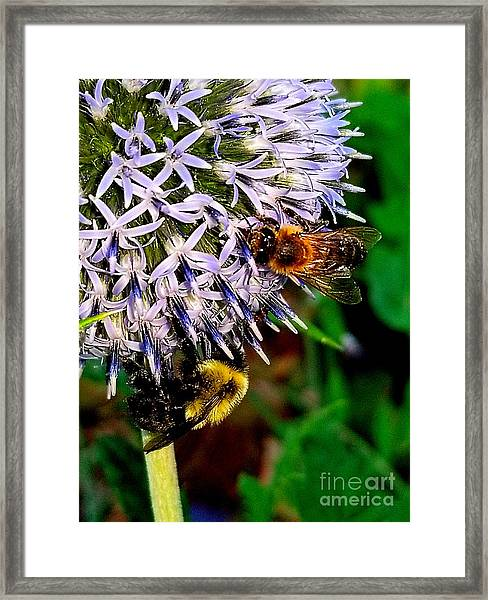 That Is The Question Framed Print