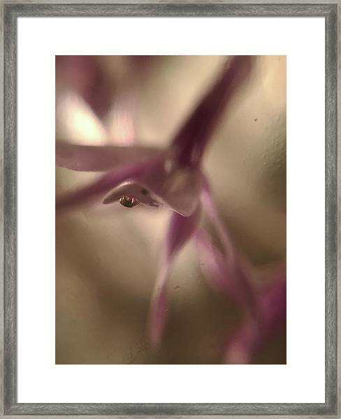 The Alien Came To Visit And We Took Photos Framed Print