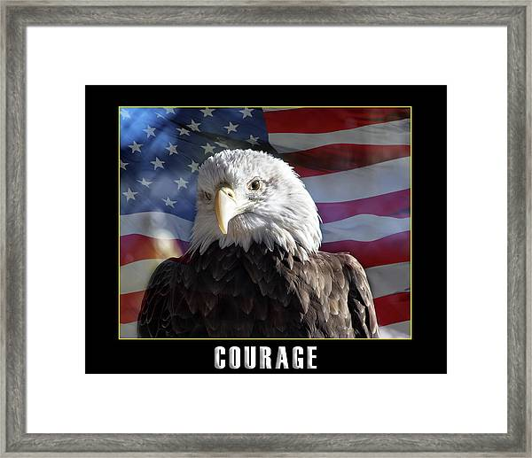 The American Bald Eagle Framed Print