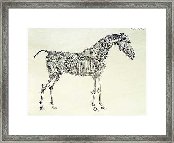 The Anatomy Of The Horse Framed Print