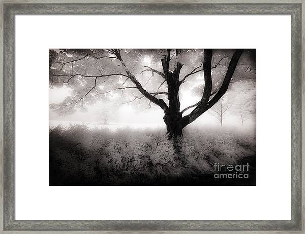 The Ancient Tree Framed Print