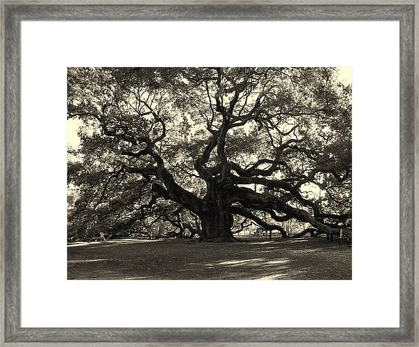 The Angel Oak Framed Print