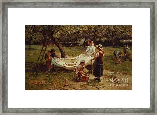 The Apple Gatherers Framed Print