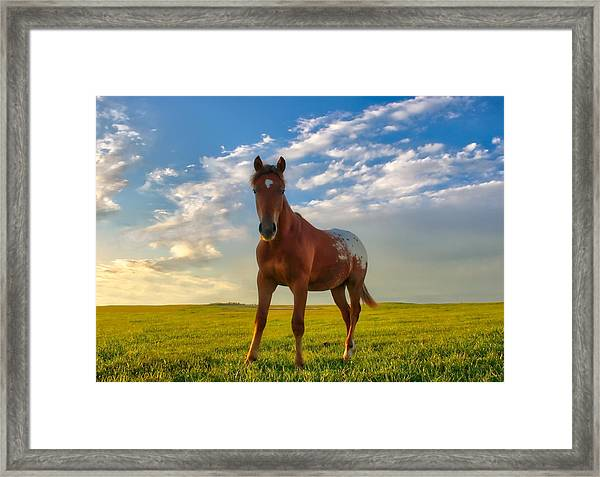 The Appy Framed Print