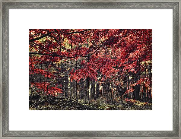 The Autumn Colors Framed Print