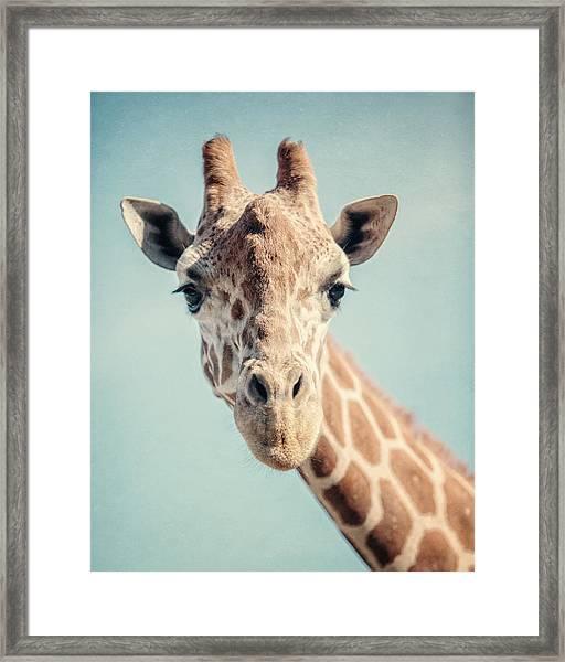 The Baby Giraffe Framed Print