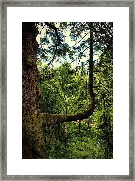 The Bendy Tree Framed Print