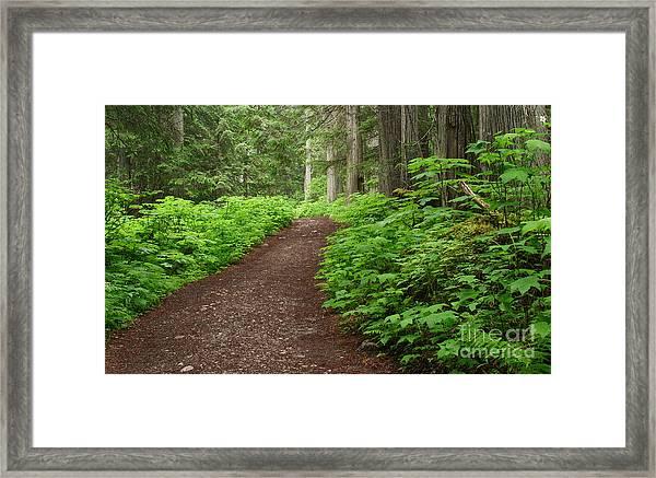 The Berg Lake Trail Framed Print