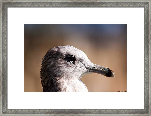 The Best Side Of The Gull Framed Print