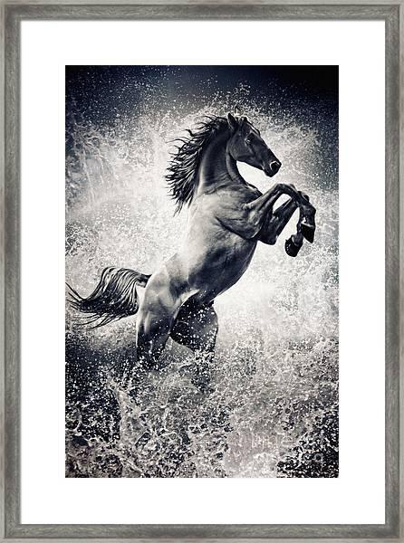 The Black Stallion Arabian Horse Reared Up Framed Print