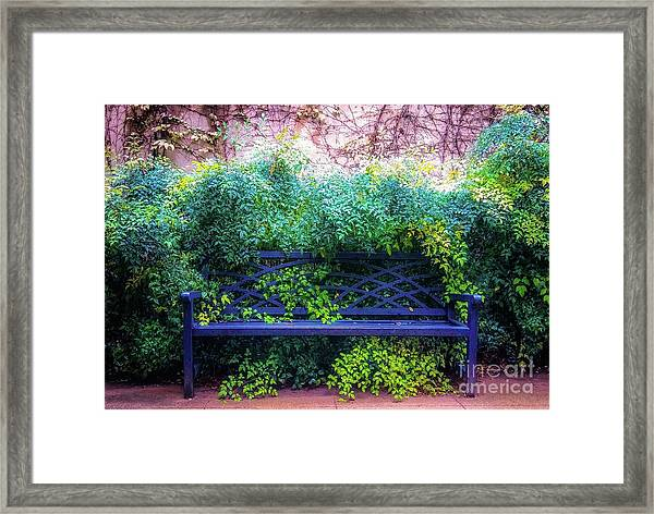 The Blue Park Bench Framed Print