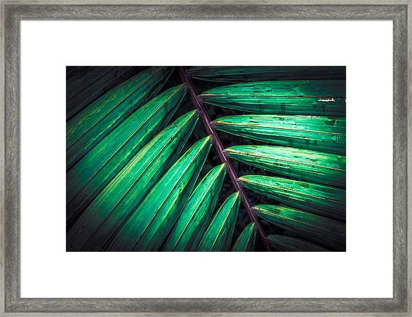 The Brush Strokes Framed Print