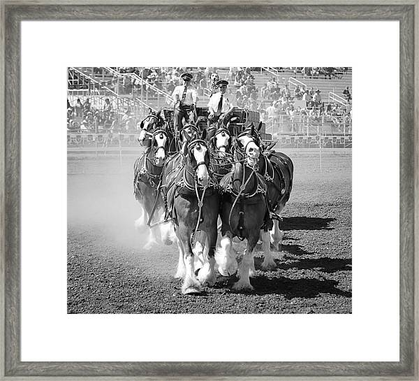 The Budweiser Clydesdales Framed Print