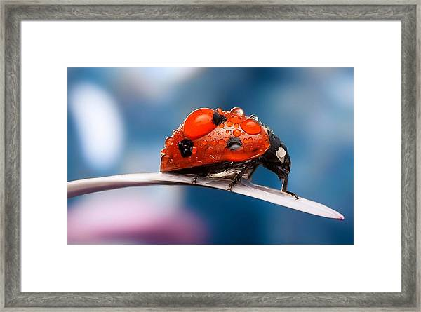 The Bug Framed Print