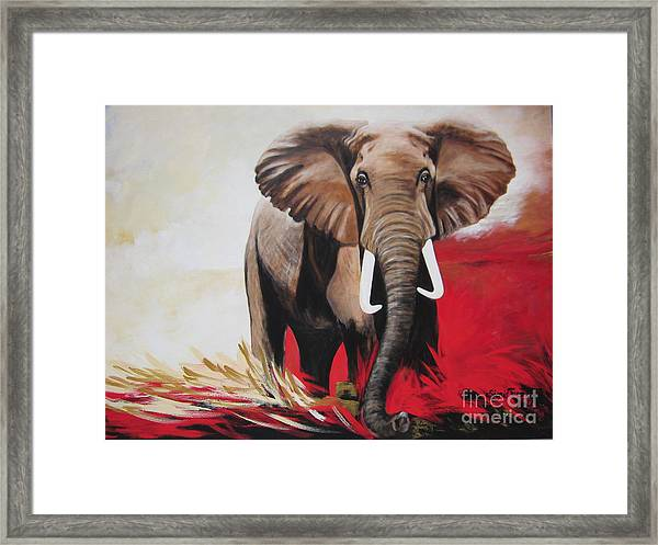 Win Win - The  Bull Elephant  Framed Print