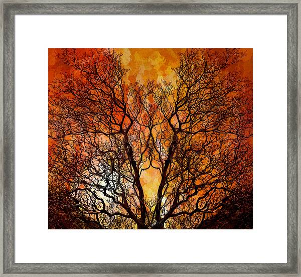 The Burning Bush Framed Print by Lynn Andrews