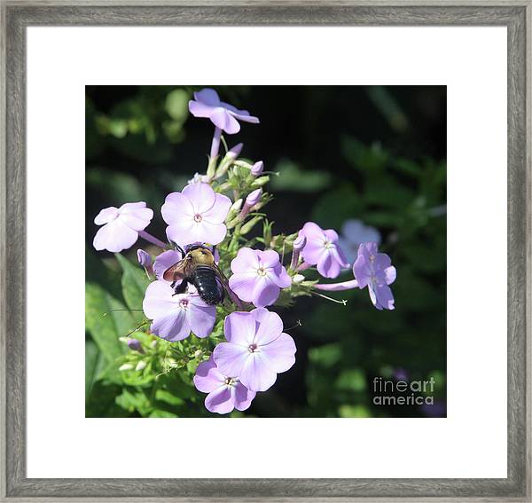 The Business Of Nature  Framed Print by Steven Digman