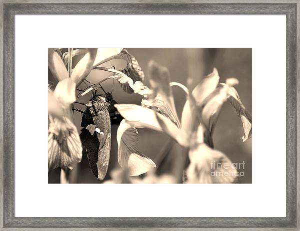 The Butterfly Framed Print