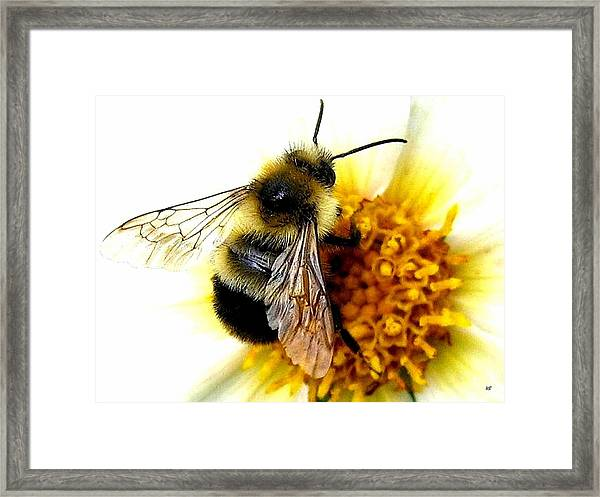 The Buzz Framed Print