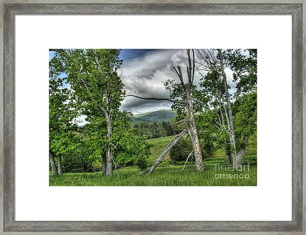 The Buzzard Trees Framed Print
