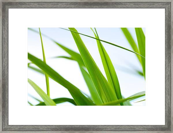 The Cane Framed Print