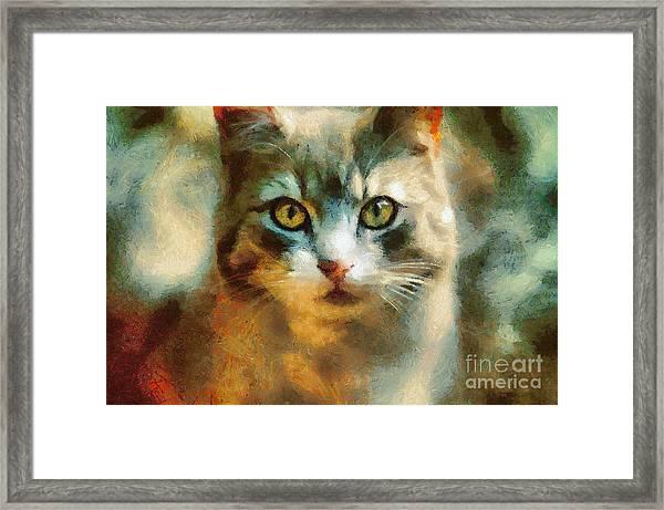 The Cat Eyes Framed Print