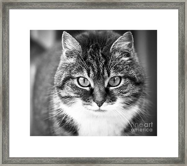 The Cat Stare Down Framed Print