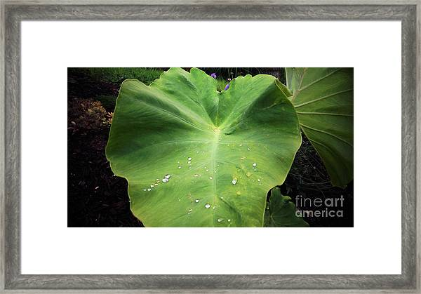 The Catcher Framed Print