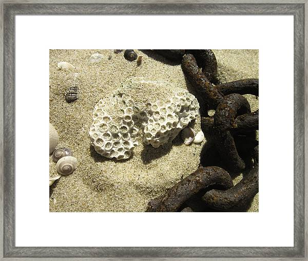 The Chain And The Fossil Framed Print