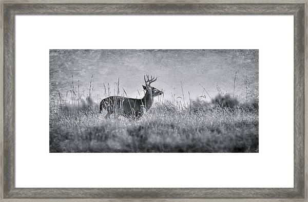 The Chase Framed Print by Garett Gabriel