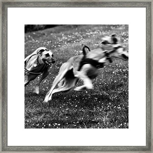 The Chasing Game. Ava Loves Being Framed Print
