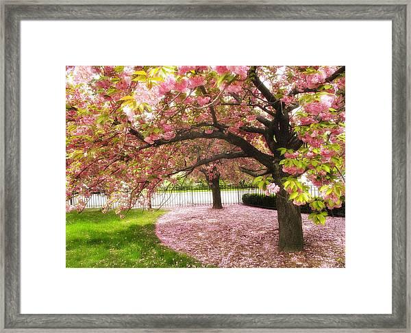 The Cherry Tree Framed Print