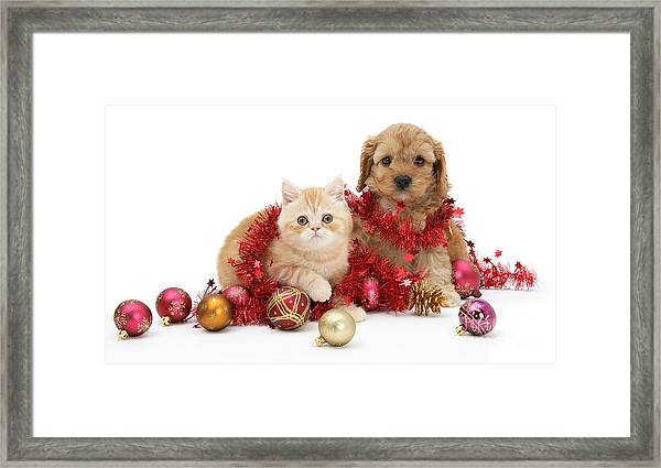 The Christmas Tree Destroyers Framed Print