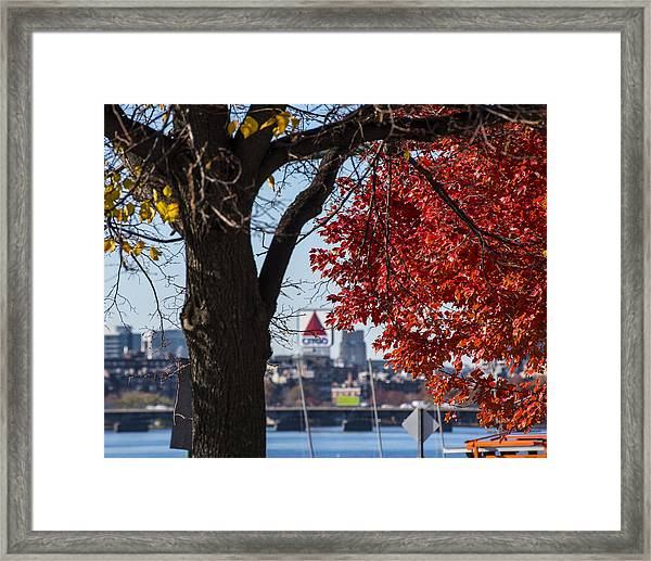 The Citgo Sign Through The Trees Boston Ma Charles River Framed Print