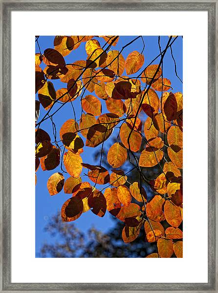 The Coinage Of Heaven Framed Print