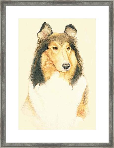 The Collie Framed Print