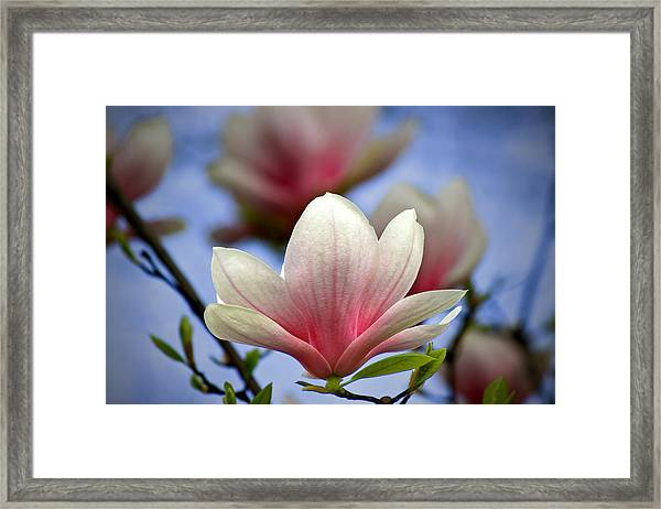 The Color Of Spring Framed Print