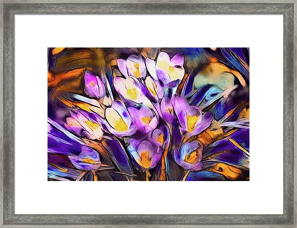The Colors Of Crocus Framed Print