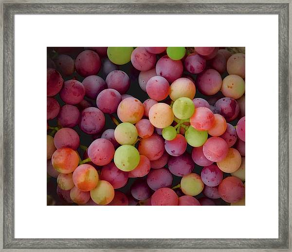 Colors Of Grapes Framed Print