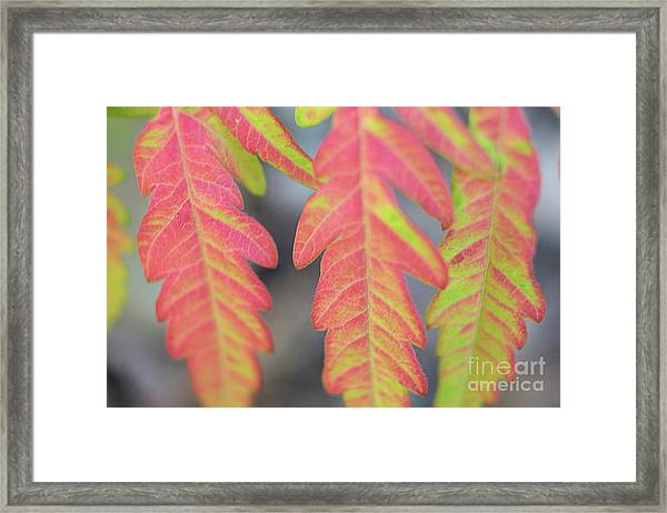 The Colors Of Shumac 8 Framed Print