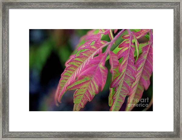 The Colors Of Shumac 9 Framed Print