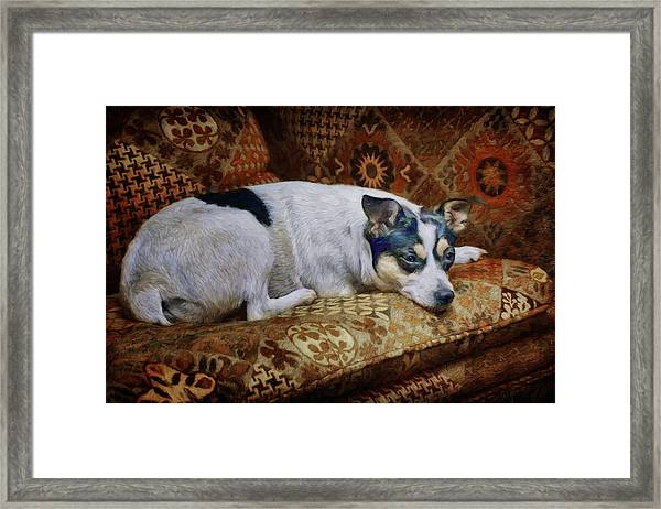 The Comforts Of Home Framed Print by Nikolyn McDonald