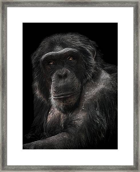 The Contender Framed Print
