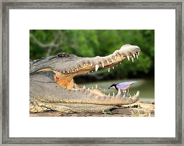 The Crocodile Bird Framed Print