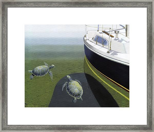 The Curiosity Of Sea Turtles Framed Print
