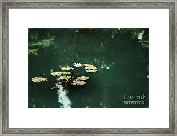 The Depths Of Lily Framed Print