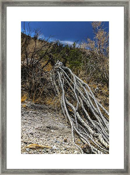 Framed Print featuring the photograph The Desert Sentinel by Break The Silhouette